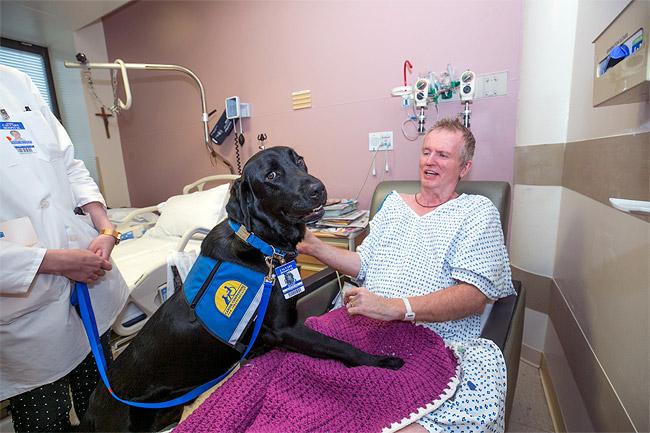 hospice NY service animal